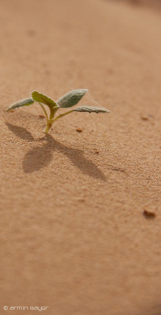Sandgrube-174.jpg