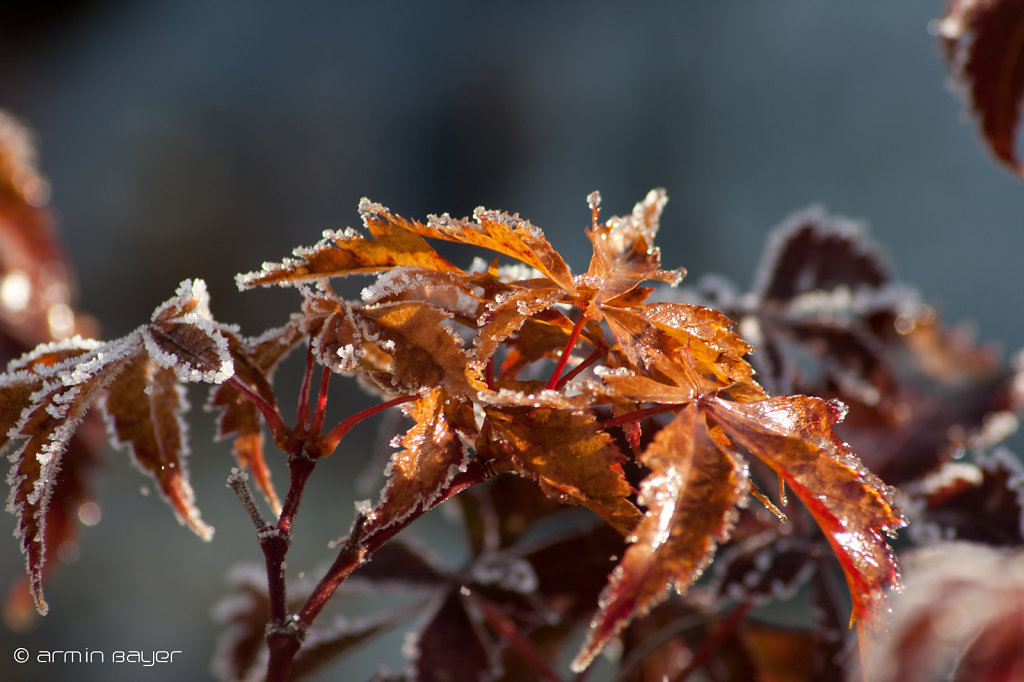 Frost-15.jpg