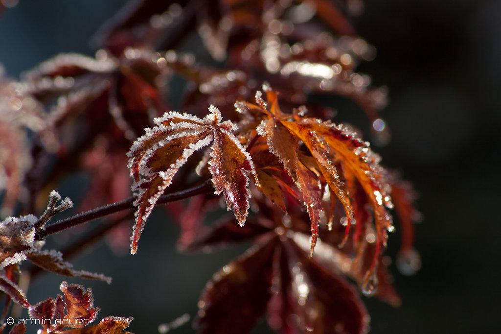 Frost-16.jpg