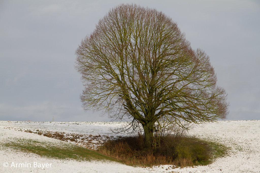 Baum-Januar-2018-6.jpg